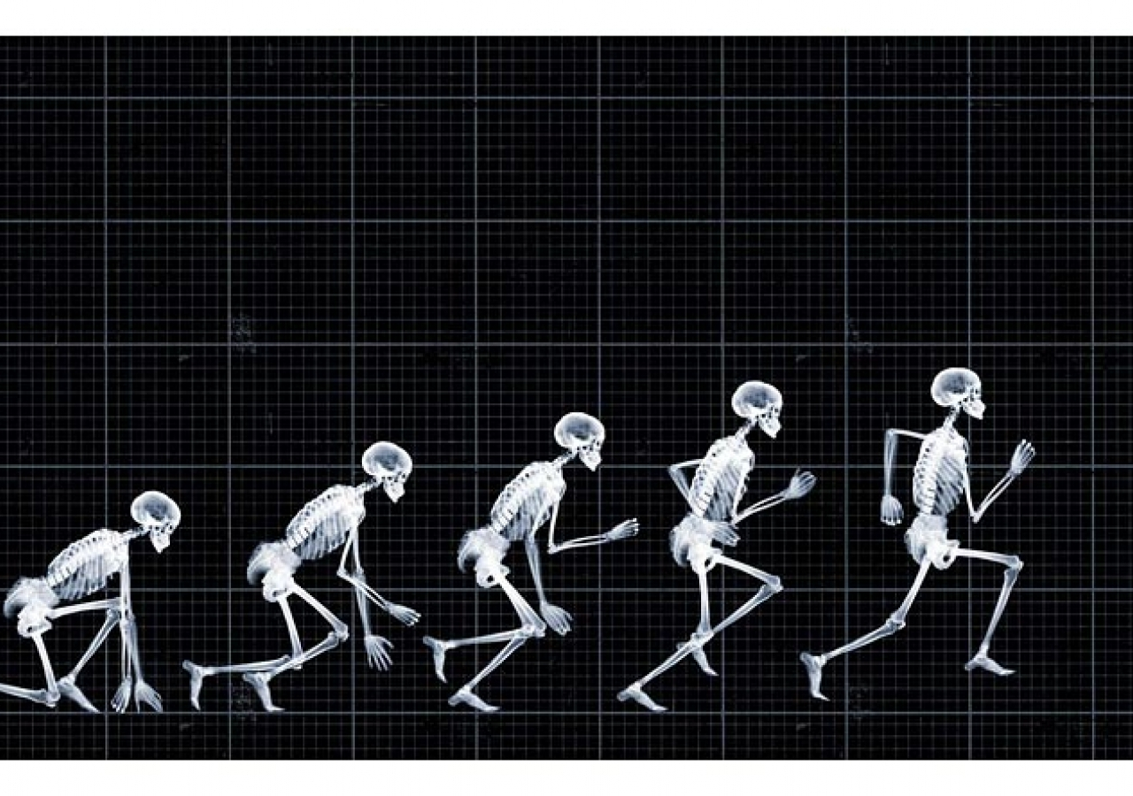 Nick Veasey, le photographe aux rayons X