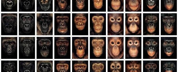 "Une galerie intitulée ""James & the other apes"", ""James et les autres grands singes"", constituée de portraits de singes, photographiés par James Mollison."
