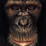 James Mollison - James & other apes - Chim