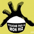 Nous ne voulons pas du riz OGM ! est le message quon a pu entendre haut et fort  travers la Chine. Ici, dans les bureaux de Greenpeace  Pkin,...