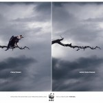 WWF - WWF_-_frightening_-_More_frightening