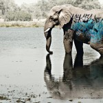 WWF - biodiversity-and-biosafety-awareness-elephant