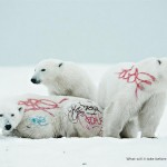 WWF - biodiversity-and-biosafety-awareness-white-bear
