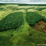WWF - deforestation2