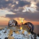 escargots - coucher soleil