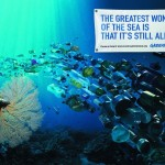 Greenpeace - the greatest wonder of the sea is that it&#039;s still alive